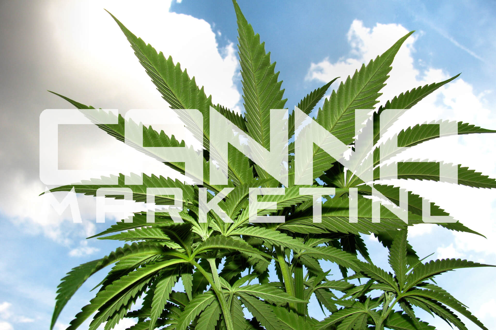 CANNA MARKETING | Online Marketing e Comunicazione Digitale per il Mondo Cannabis e l'Industria della Canapa e della Marihuana Legale Light
